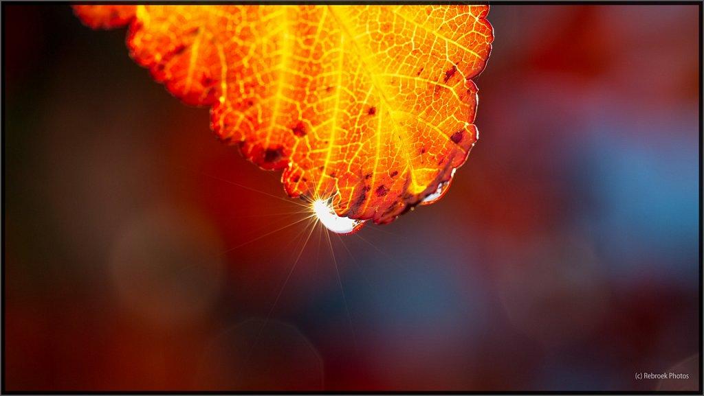 Herbst-7.jpg