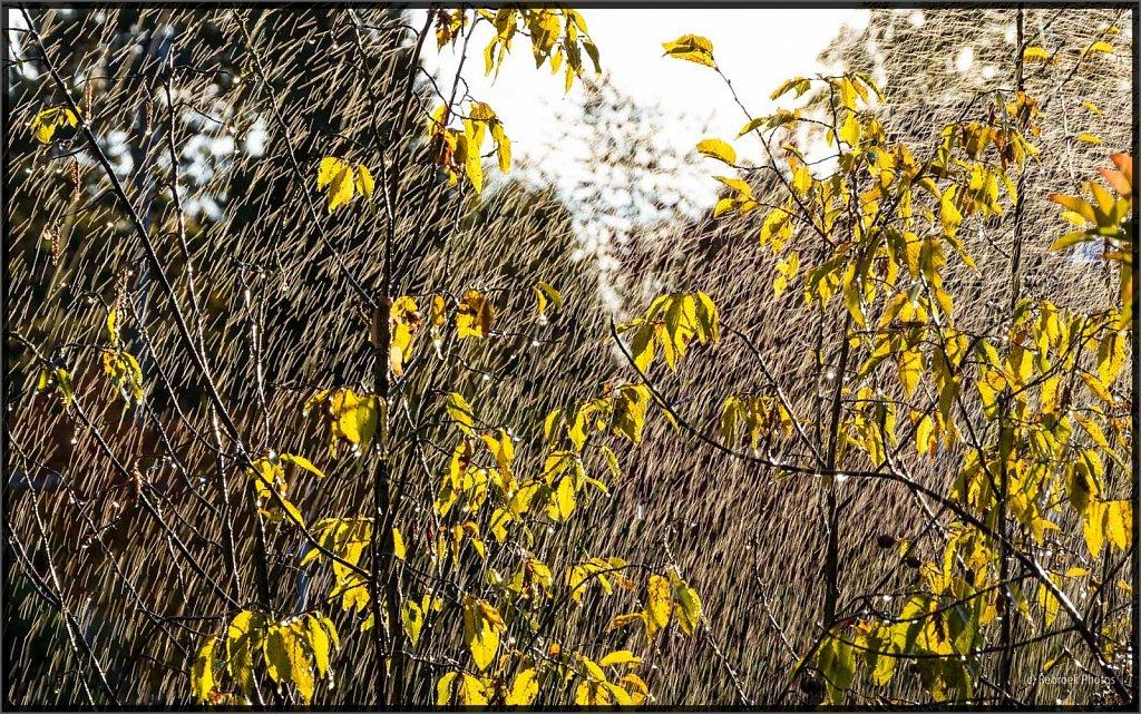 Herbst-8.jpg