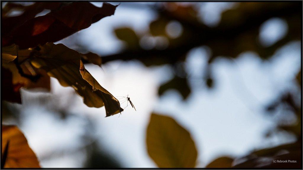 Herbst-9.jpg
