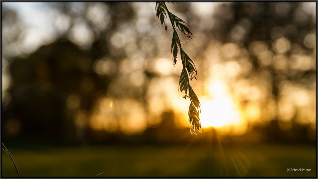 Herbst-11.jpg