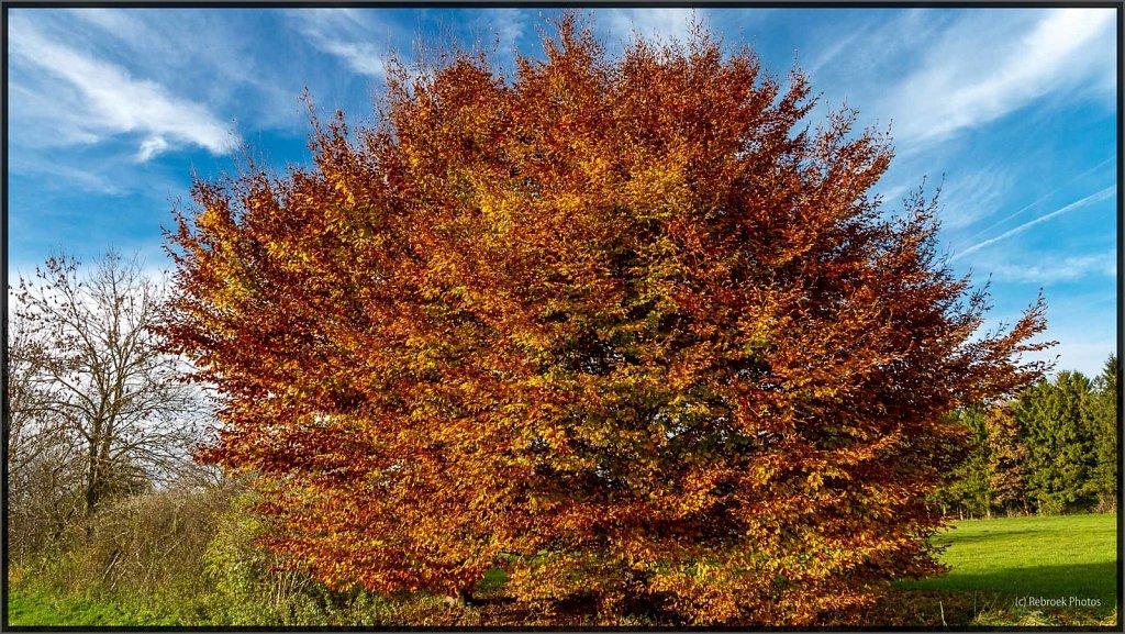 Herbst-18.jpg