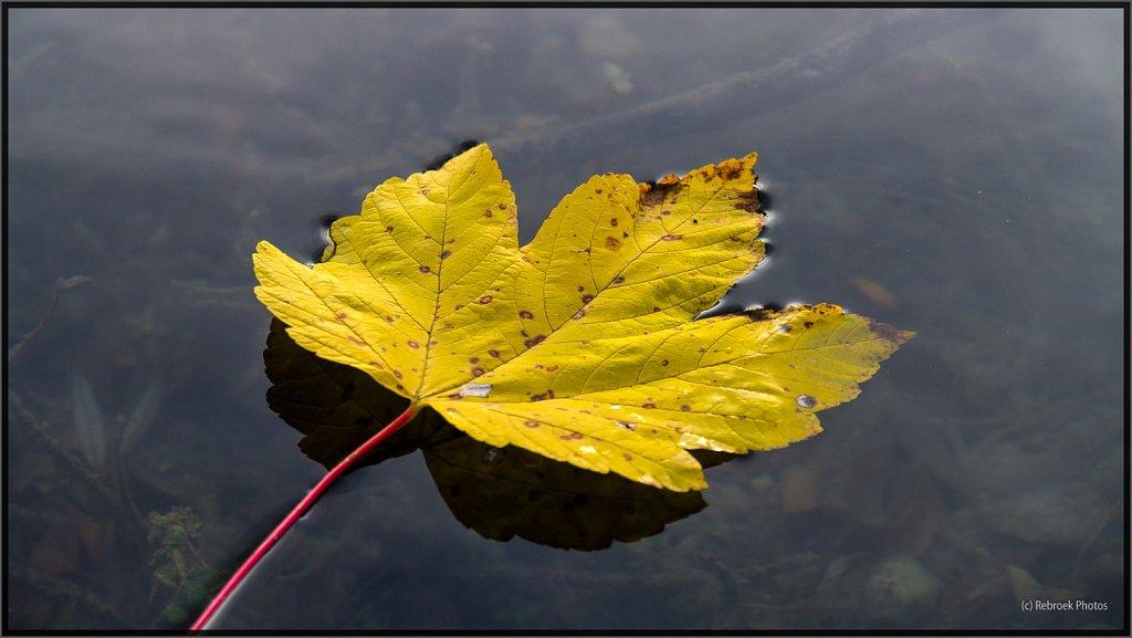 Herbst-20.jpg
