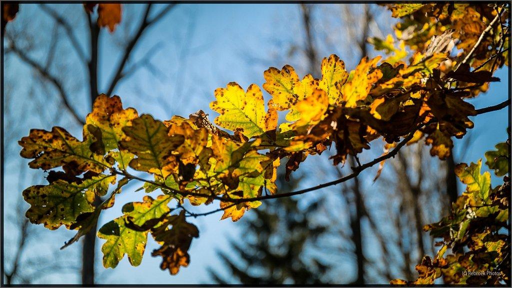 Herbst2-11.jpg
