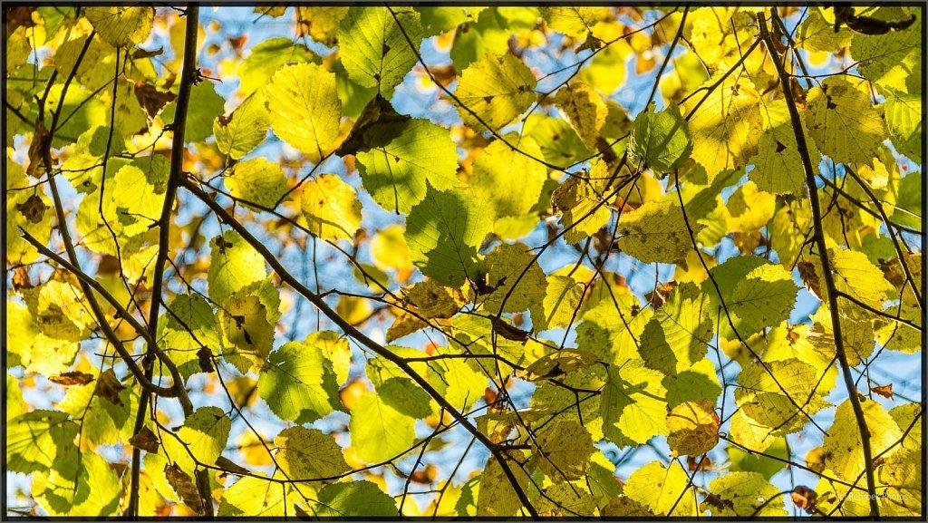 Herbst2-12.jpg