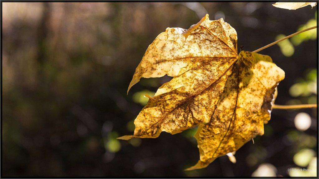 Herbst2-13.jpg