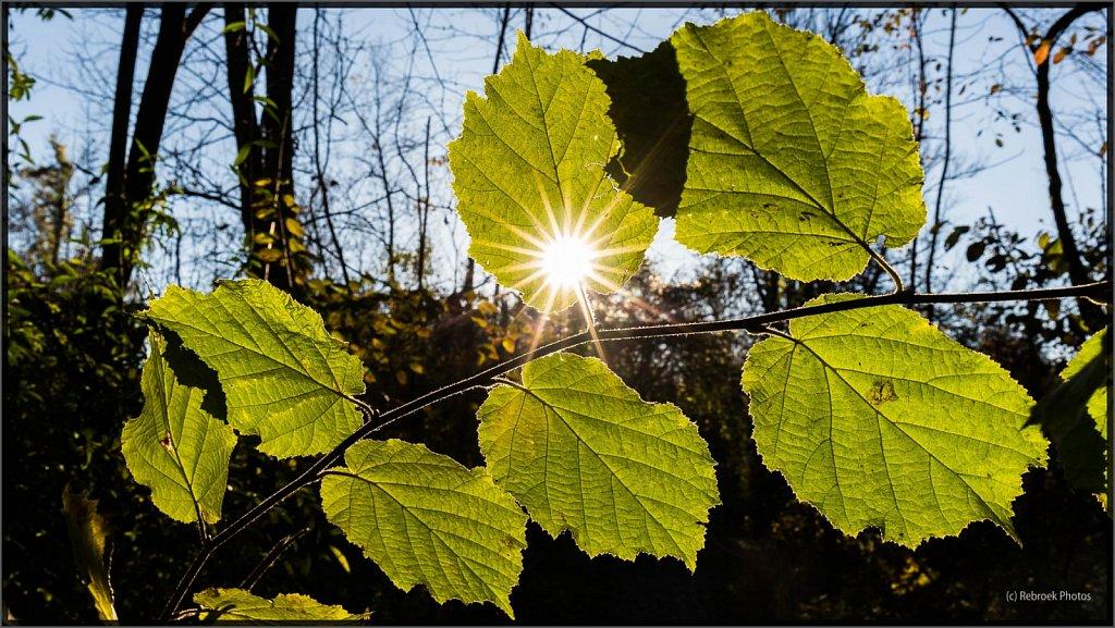 Herbst2-18.jpg