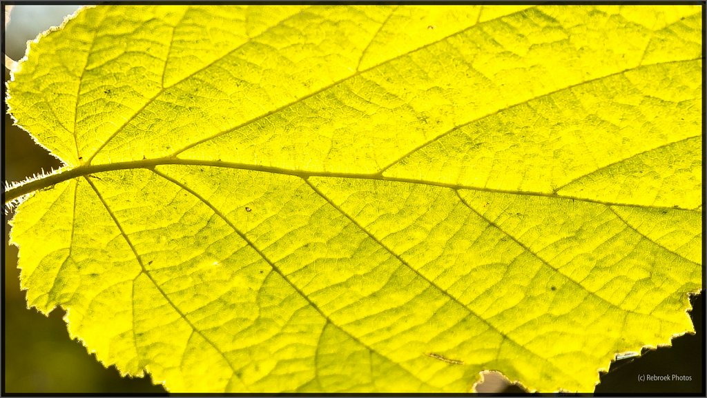 Herbst2-19.jpg