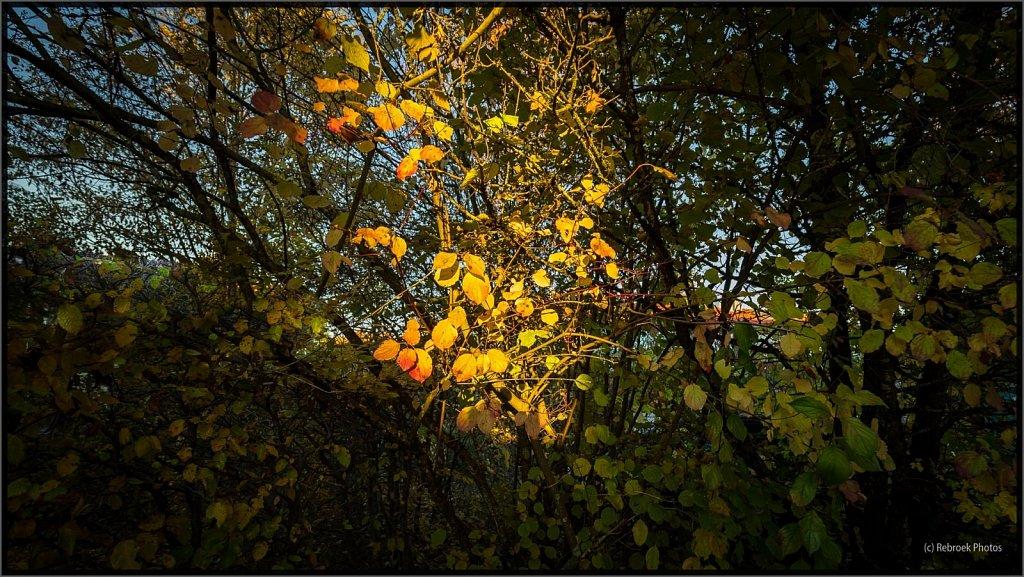 Herbst2-27.jpg