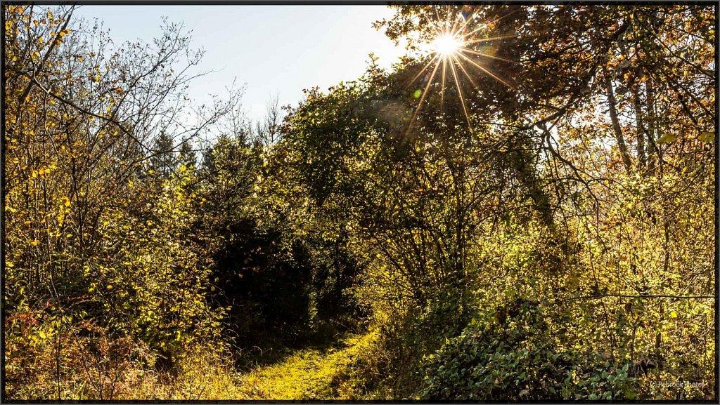 Herbst2-10.jpg
