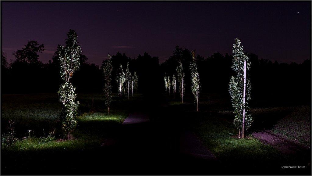 Nacht-14.jpg