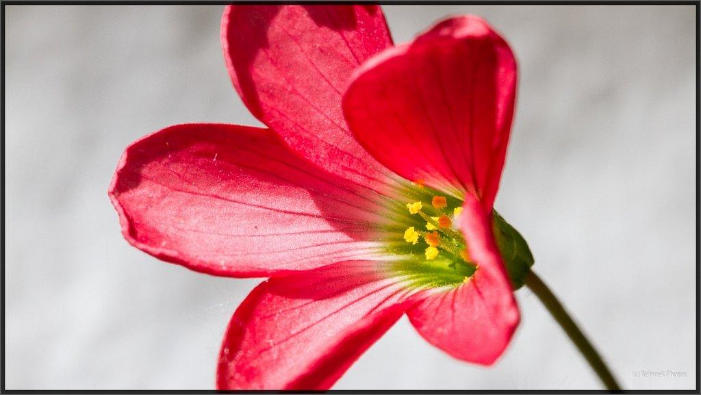 Blumen-21.jpg