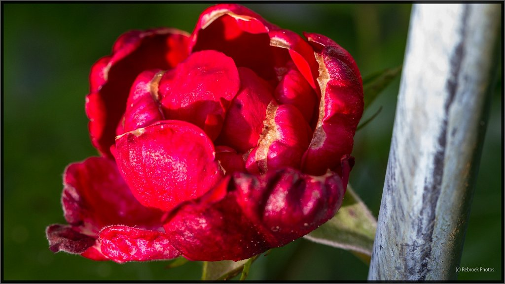 Blumen-22.jpg