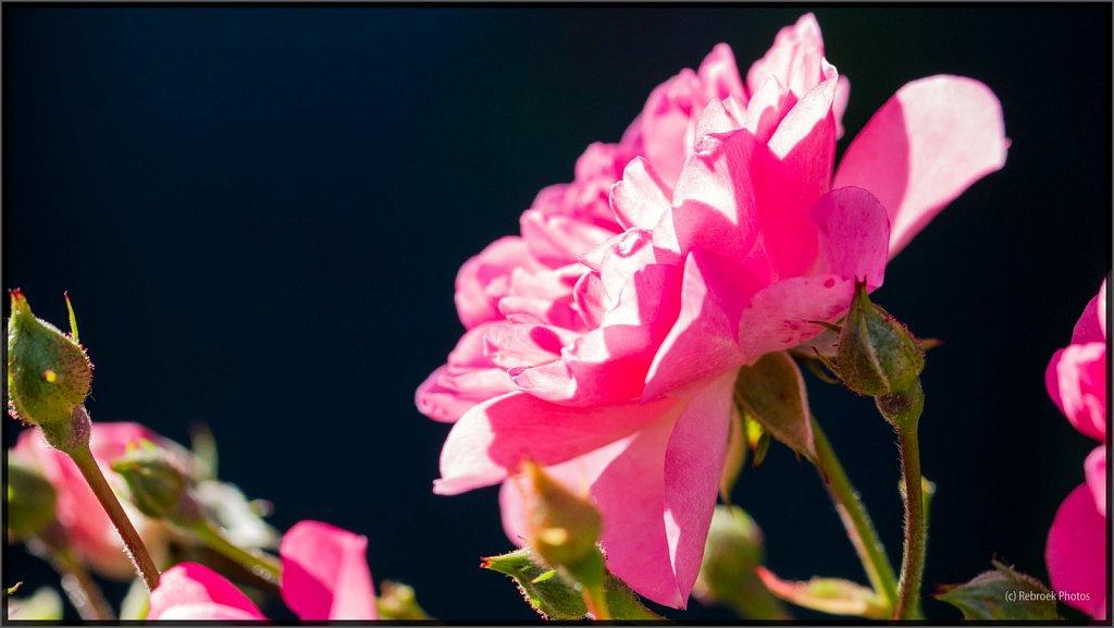 Blumen-23.jpg
