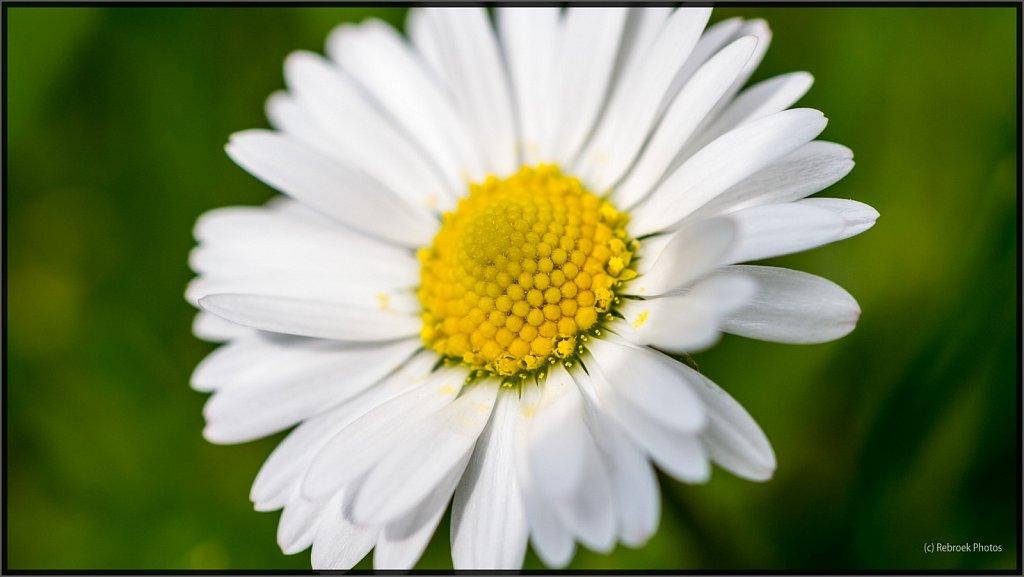 Blumen-27.jpg