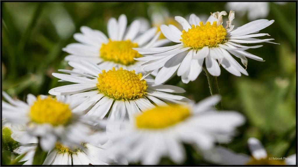 Blumen-28.jpg