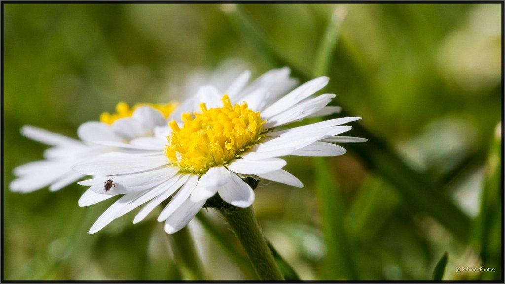 Blumen-29.jpg