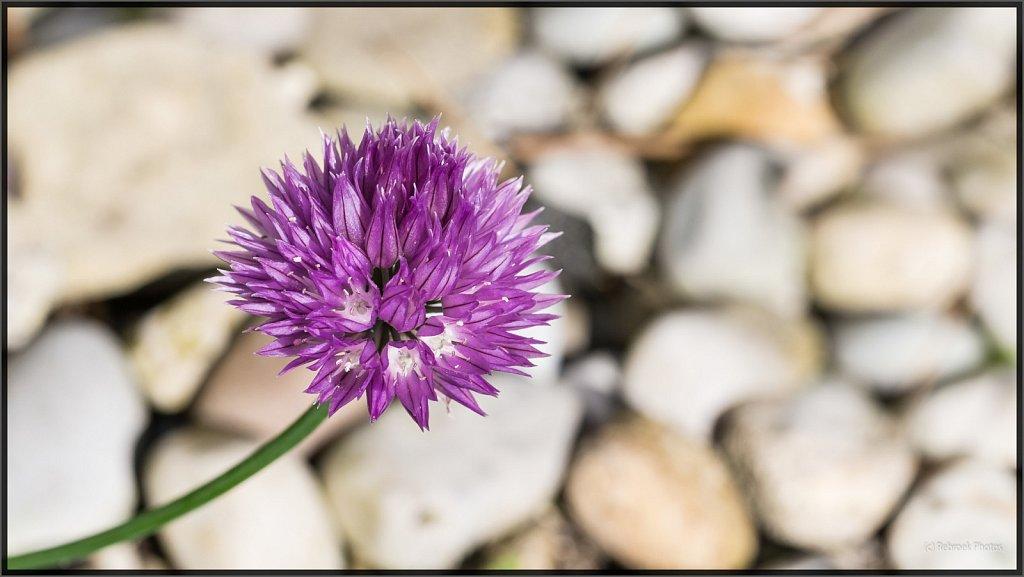 Blumen-30.jpg