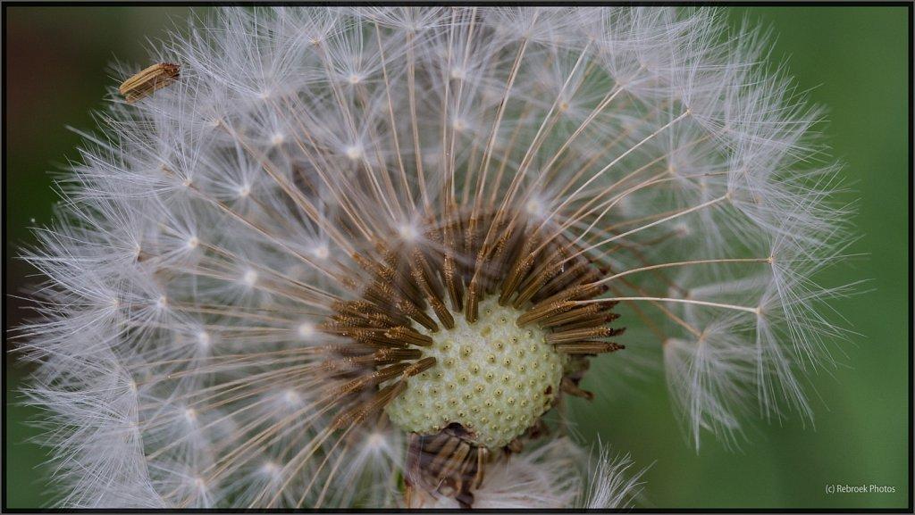 Blumen-01.jpg