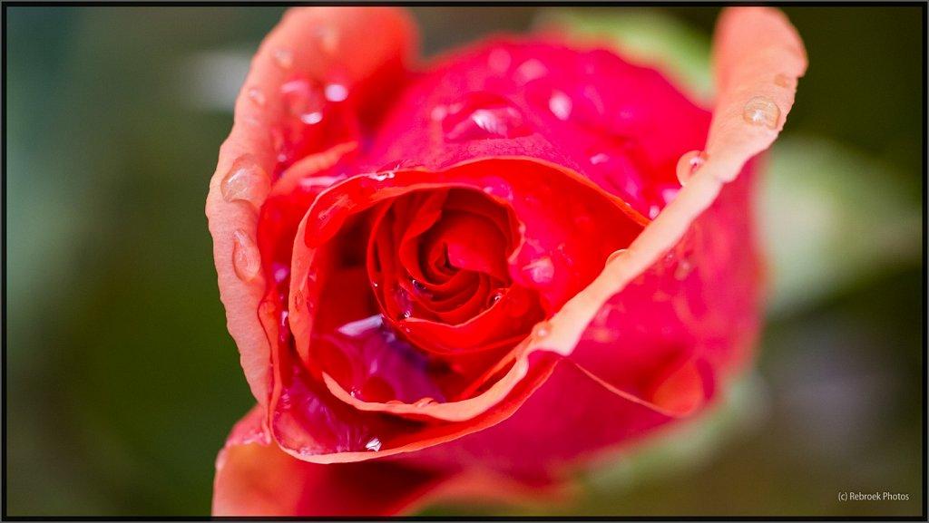 Blumen-06.jpg