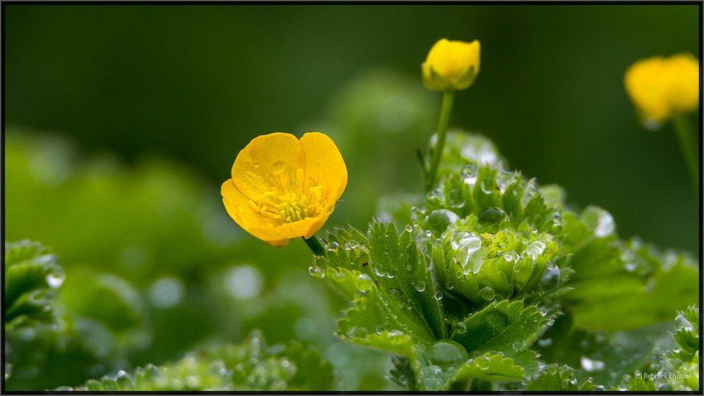 Blumen-12.jpg