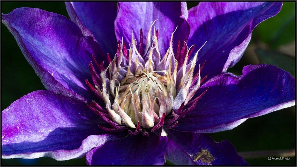 Blumen-15.jpg