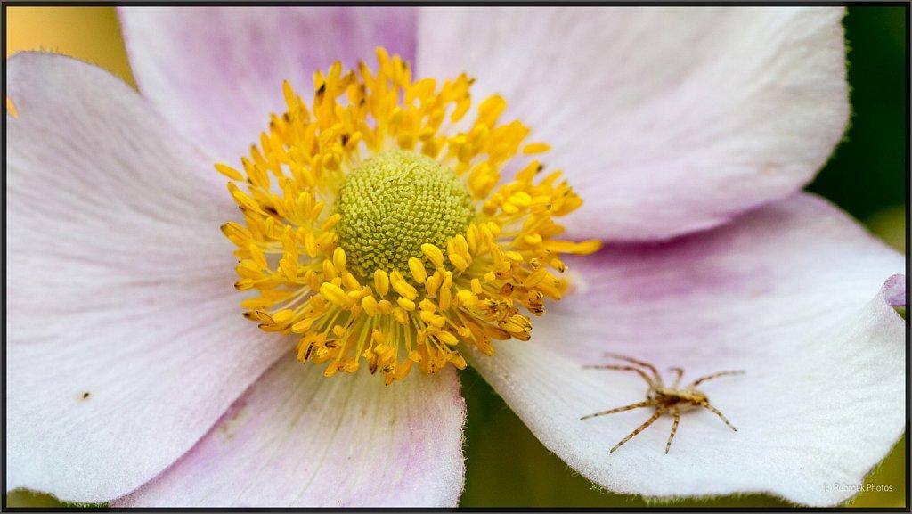 Blumen-17.jpg