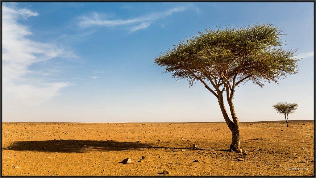 Sahara-Sunset-18.jpg