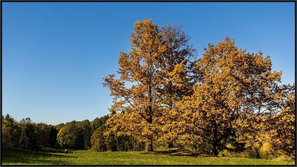 Herbst-14.jpg