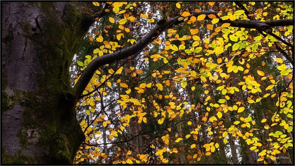 Herbst-19.jpg
