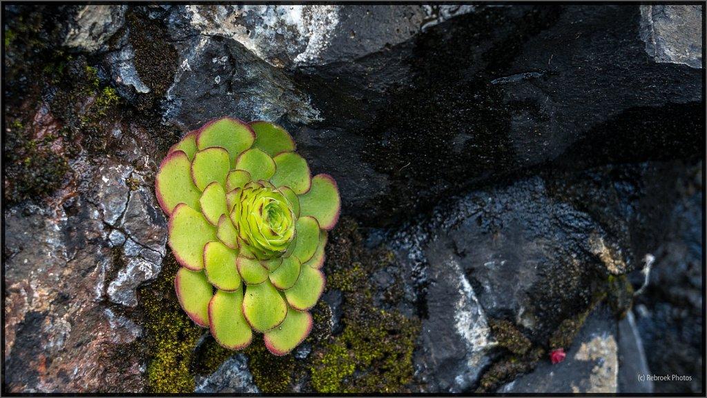 Madeira-18.jpg