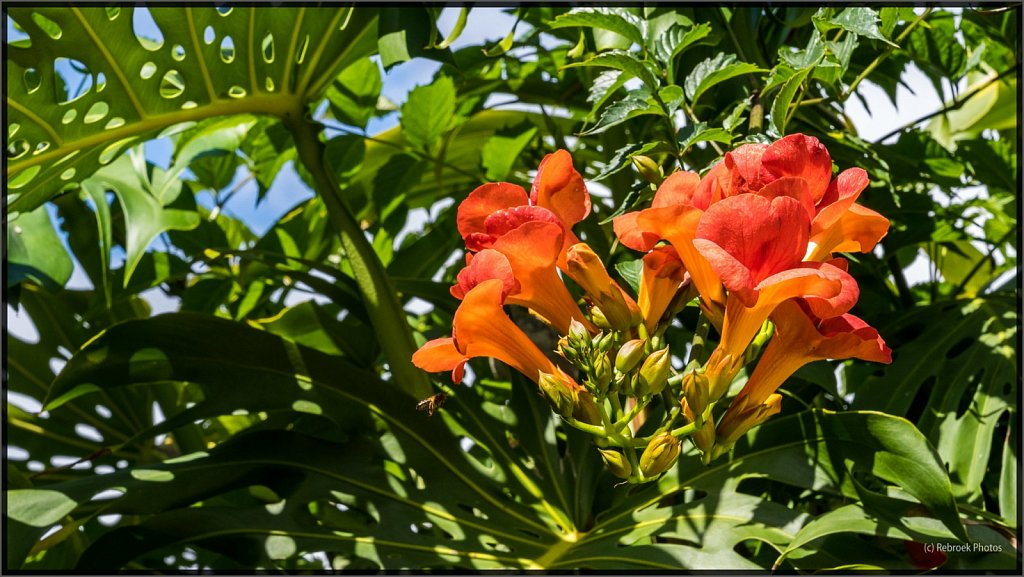 Madeira-84.jpg