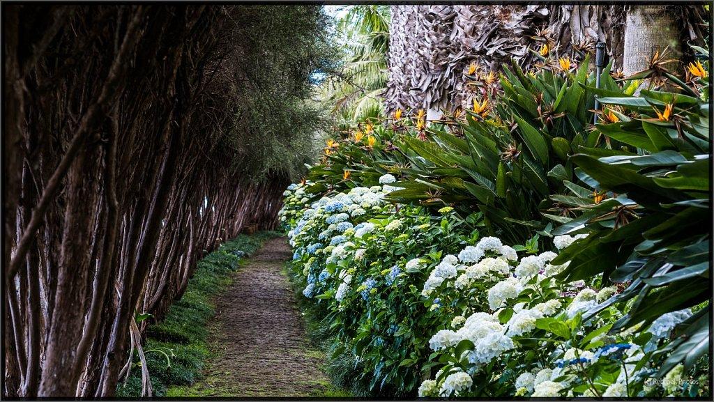 Madeira-93.jpg
