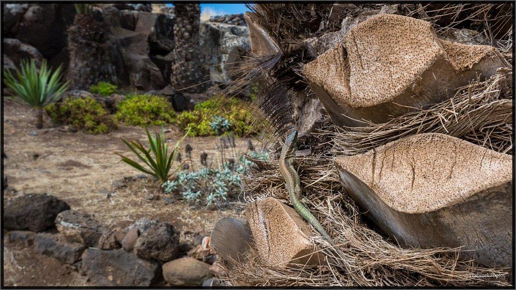 Madeira-75.jpg